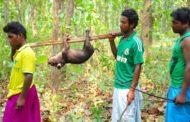 'बोनोदल' मा सन्थालको कथा